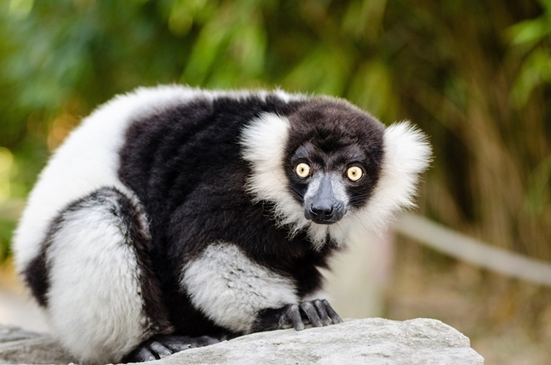 Lemur Monkeyland near Knysna Garden Route • Cape Town Travel Guide